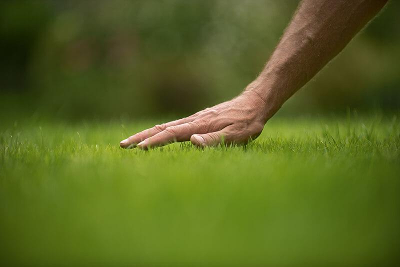Zakładanie nowego trawnika