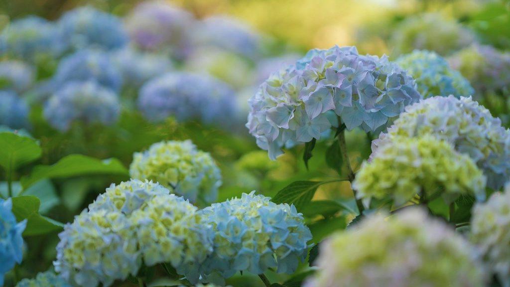 W moim magicznym ogrodzie - pielęgnacja krzewów