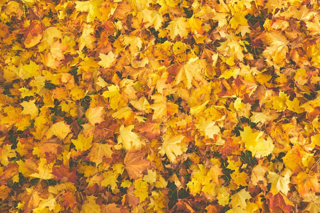 Październikowy czas w ogrodzie - jakie zadania nas czekają?