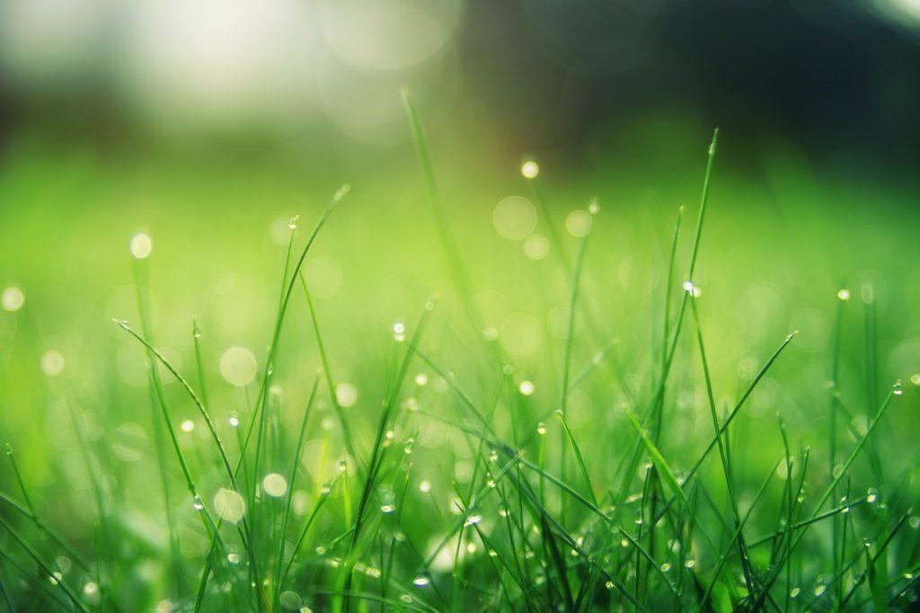 Jak zadbać o ogród po ulewnych deszczach?